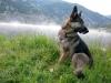 Wyatt on Patrol at Vickers Ranch