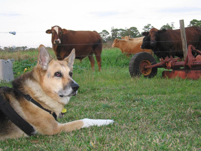 dogs and dairy