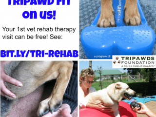 Tripawd Rehabilitation Therapy