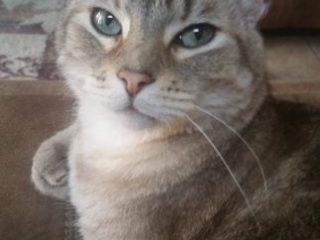 Fredo the Tripawd Cat