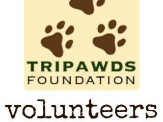 help Tripawds