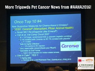 Tripawd cancer news AAHA 2016