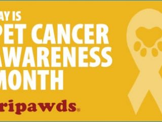 TPPPetCancerMonth