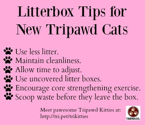 Litterbox tips for tripawd cats
