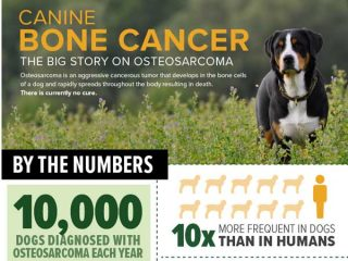 osteosarcoma infographic