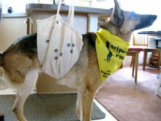 DIY Tripawd dog sling