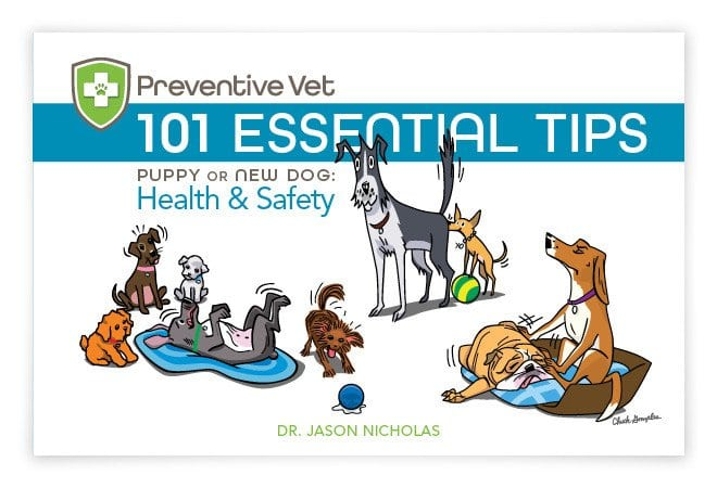 dog health and safety tips