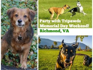 Tripawds Party Virginia