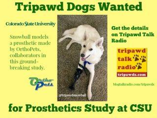 Tripawd prosthetic study