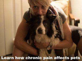 canine arthritis management