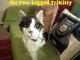 Three Paw Tripawd Kitty