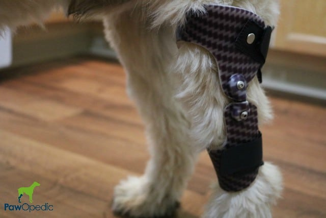 pet prosthetic help