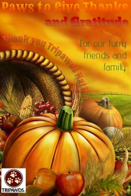 Tripawds Thanksgiving