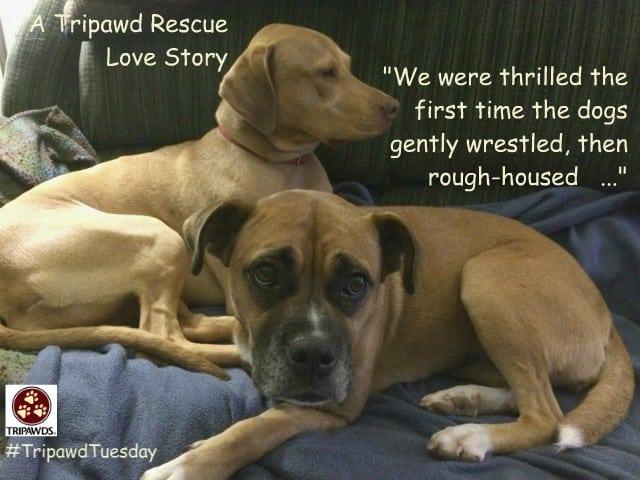 three legged rescue