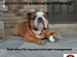 myxosarcoma pain managment