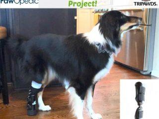free pet prosthesis
