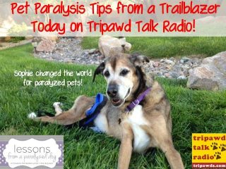 paralyzed pet tips