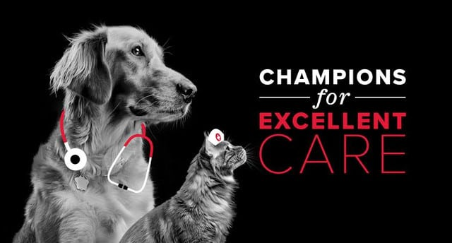 #AAHADay, AAHA-accreditation, AAHA veterinary clinics, quality veterinary care, best vets