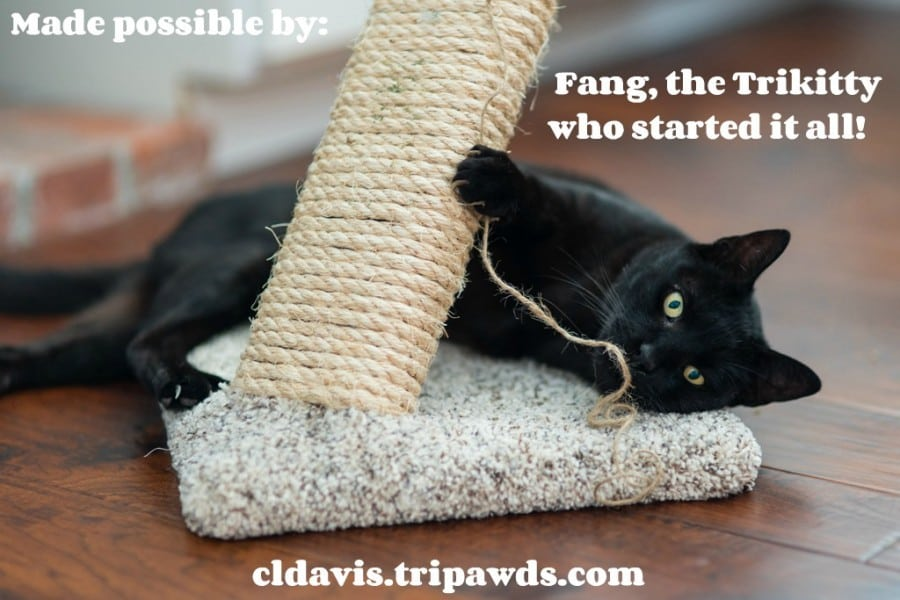 Cool Tips for Tripawd Cat Thanks Fang