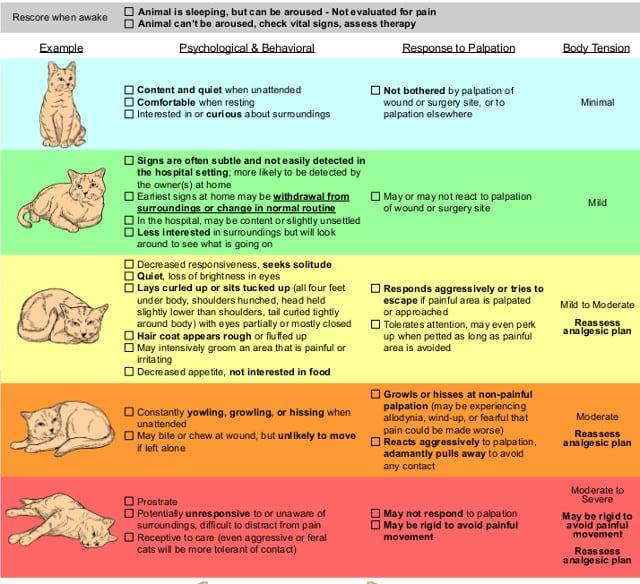 Feline Pain Scale Chart