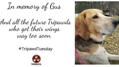 Future Tripawd, Angel Gus