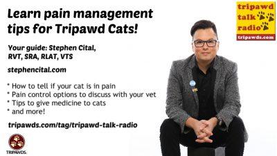 Tripawd Cats Pain Management
