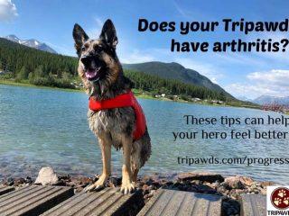 manage Tripawd arthritis