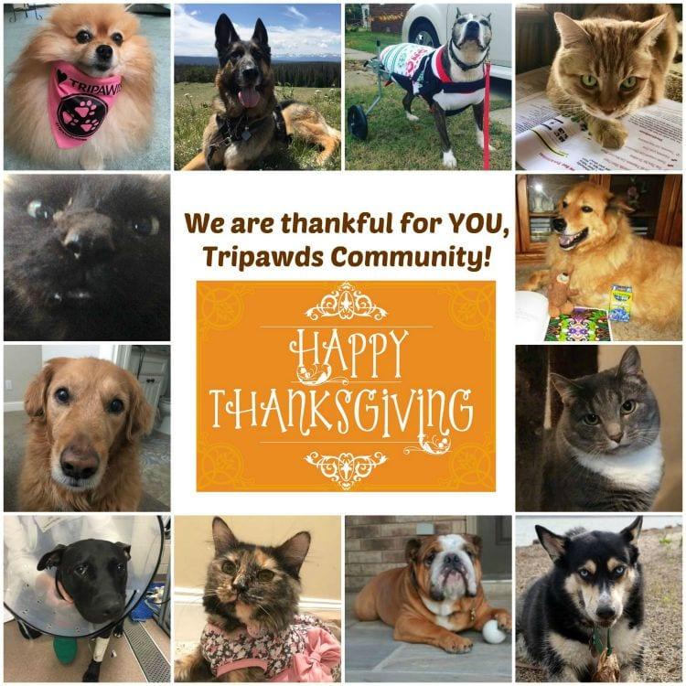 help Tripawds thanksgiving