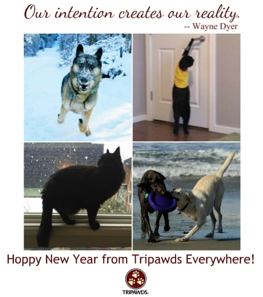 Tripawd New Year 2019