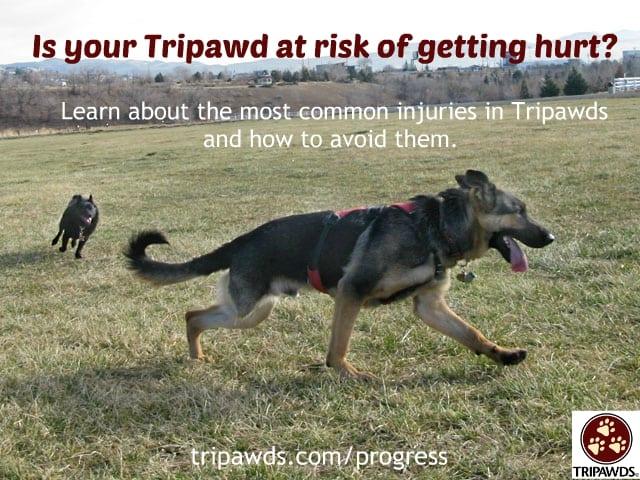 Tripawd,self-limit,activity,injury,rehab,CSU