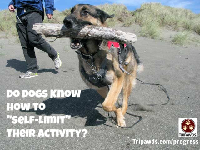 Tripawd,self-limit,activity,injury,rehab,CSU