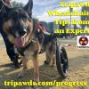 tripawd wheelchair tips