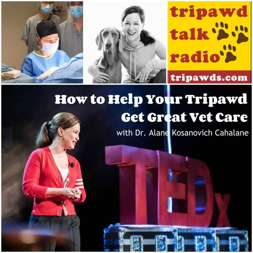 help your Tripawd get great vet care