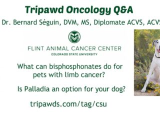 Tripawd Limb Cancer Treatments