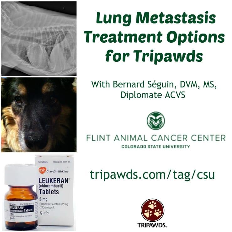 lung metastasis in Tripawds