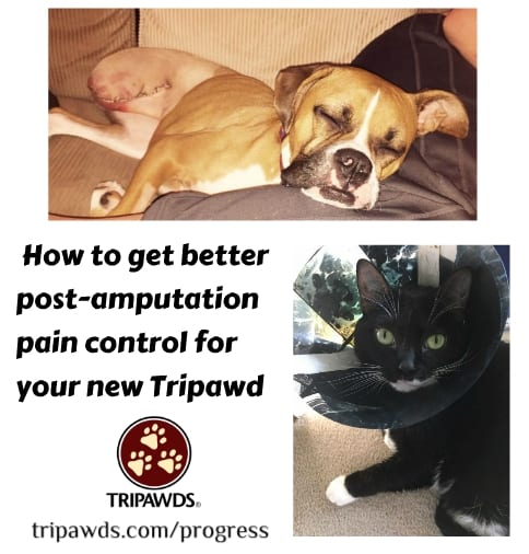 better post-amputation pain control for dogs and cats