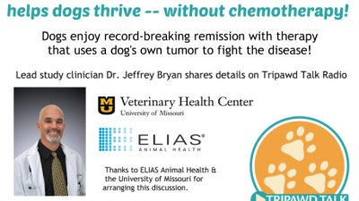 osteosarcoma,dogs,vaccine,immunotherapy,dr. jeffrey bryan, remission,university of missouri,elias animal health,study,clinical trial