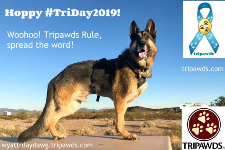 TriDay2019, Tripawd Awareness