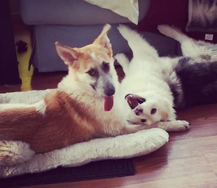Katusha and Dasha from Dire Straits Paw Rescue