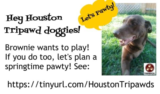 HoustonPawty.jpg
