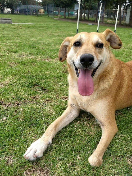 Rescue Tripawd dog Ruben