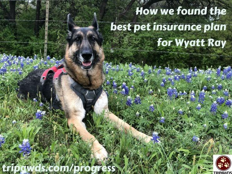 Tripawds Best Pet Insurance