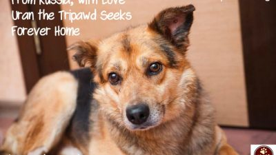 uran the adoptable tripawd rescue
