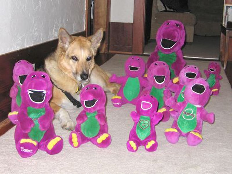 Jerry and His Pack o Barneys