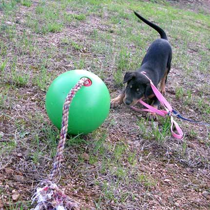 Tuggo Dog Toys, puppy, interactive, game, tripawd