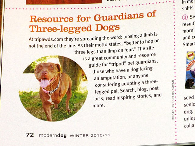 Tripawds featured in Modern Dog Magazine