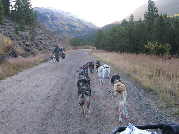 sled dog, musher, german shepherd