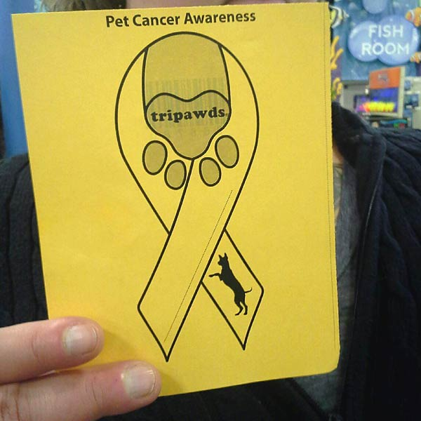 Pet Cancer Awareness Month Ribbon