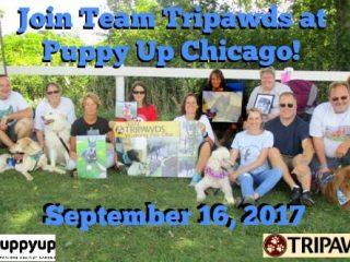 Tripawds-PuppyUp-Chicago