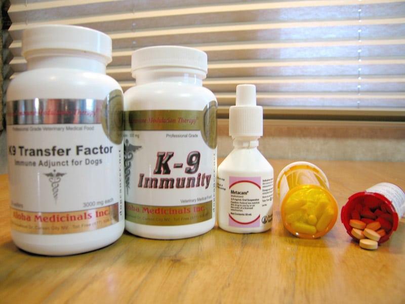 Metronomics and K9 Immunity
